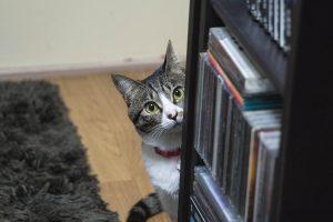 セレクターズのスタッフ猫のご紹介