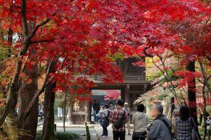 新座の紅葉の名所、平林寺で紅葉狩り