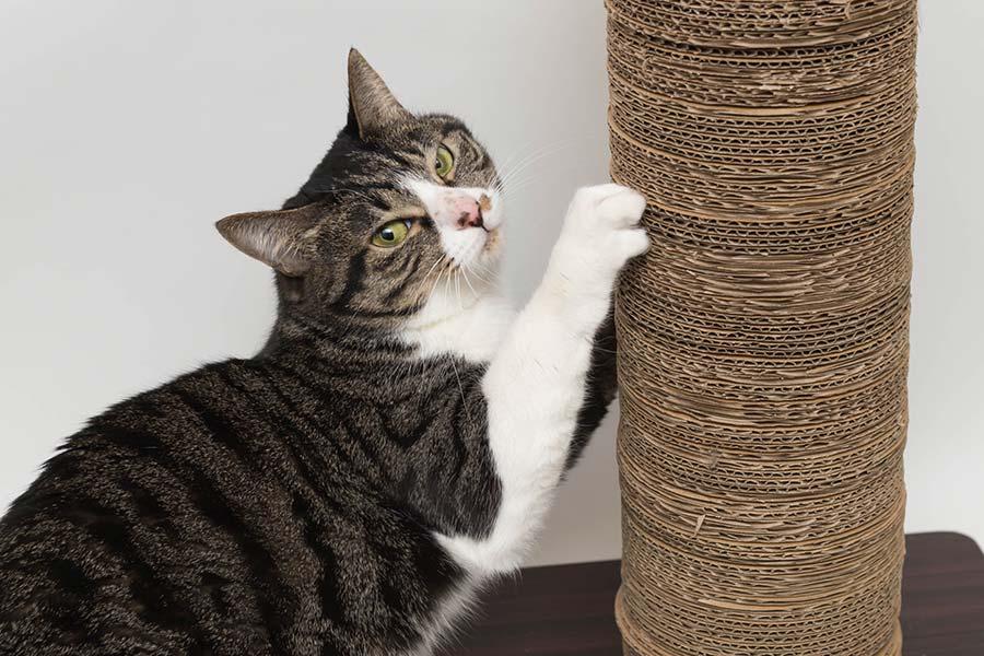 2月22日は、にゃんにゃんにゃん!で猫の日ですが...