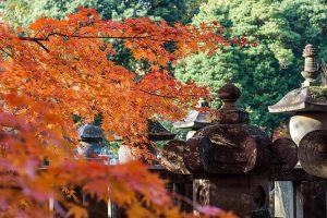 平林寺で紅葉狩り(2017年)