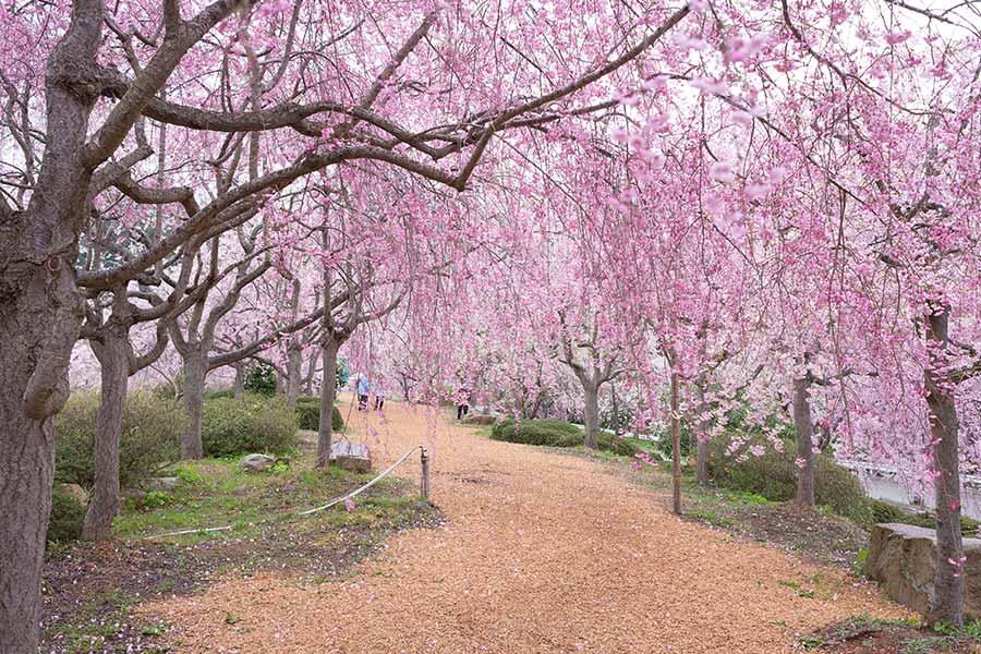 春の富山旅(2018年)