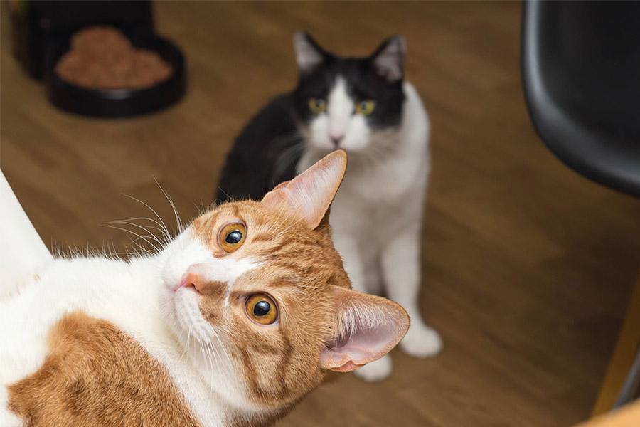 猫たちの近況報告