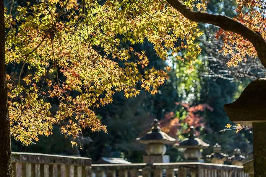 新座の紅葉の名所、平林寺で紅葉狩り(2019年)